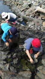 灯台のそばの浜辺でタイドプールを見る子供たち。