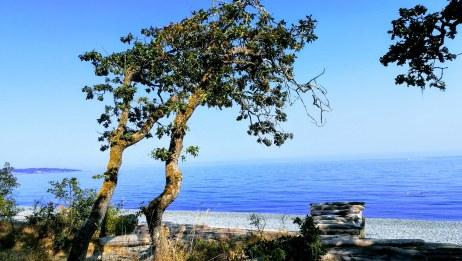 デボニアンパークヘ。森を抜けた所に広がる青い海!